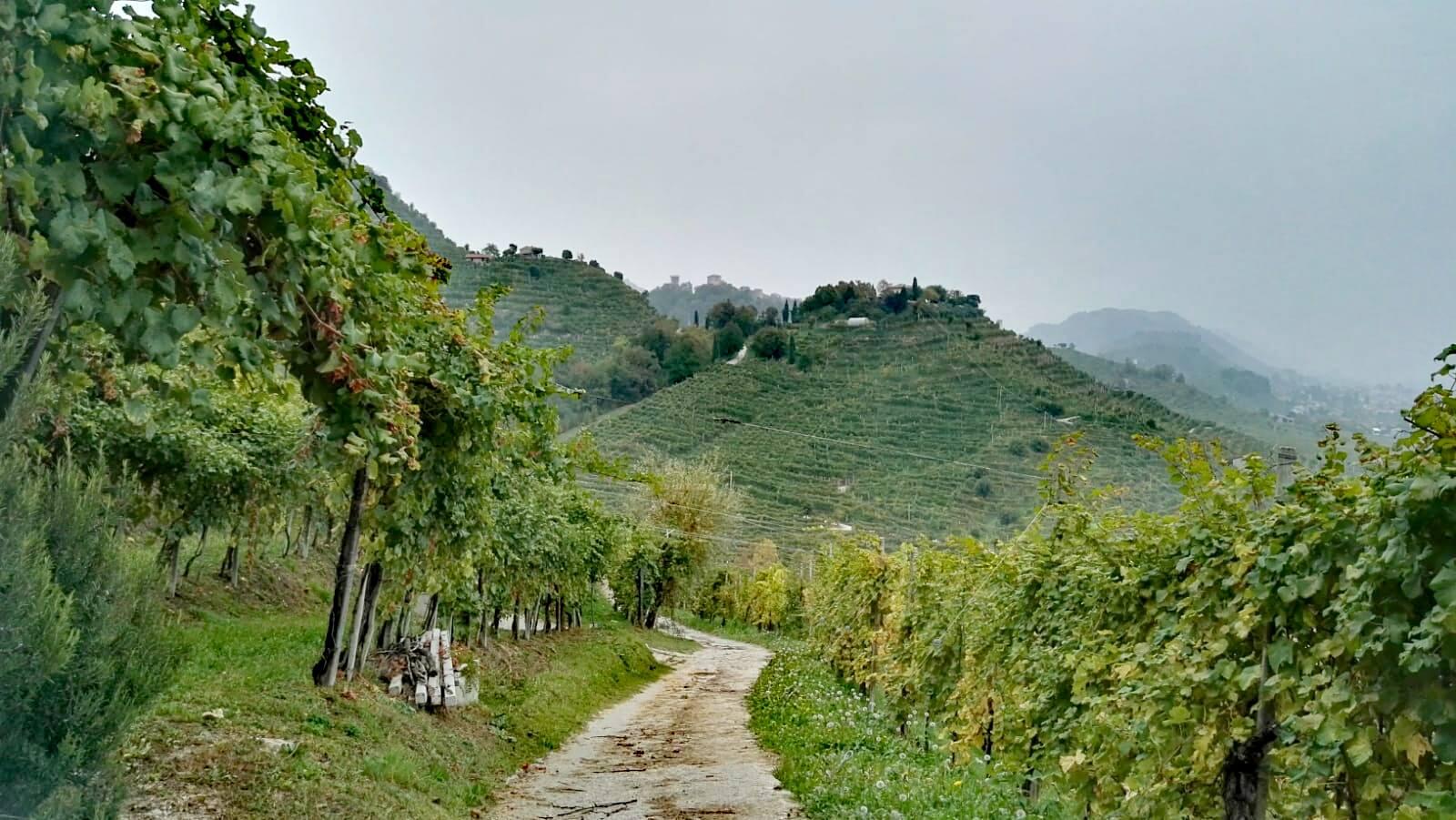 le colline del prosecco natura e degustazione